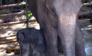 Riding Elephants in Chiang Mai